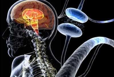 هل تبدأ الإصابة بداء باركنسون قبل الولادة؟ - خلايا دماغية مضطربة منذ الولادة - الخلايا العصبية المسؤولة عن تصنيع الدوبامين في الدماغ