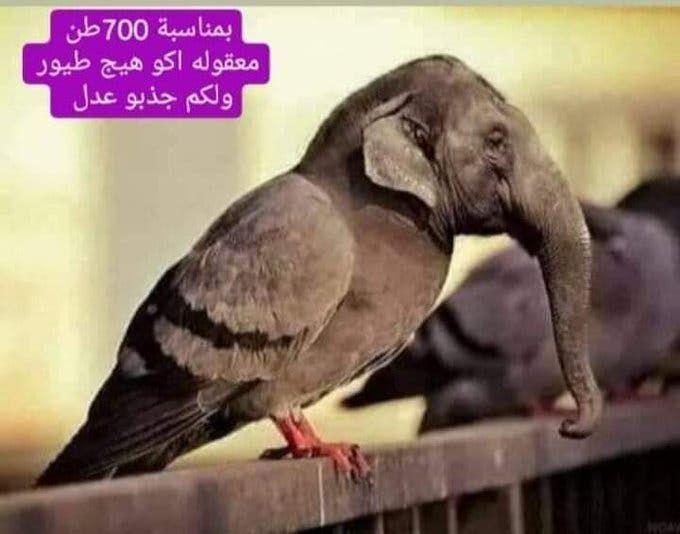 هكذا سخر العراقيون من الطيور التي أكلت الحنطة في النجف