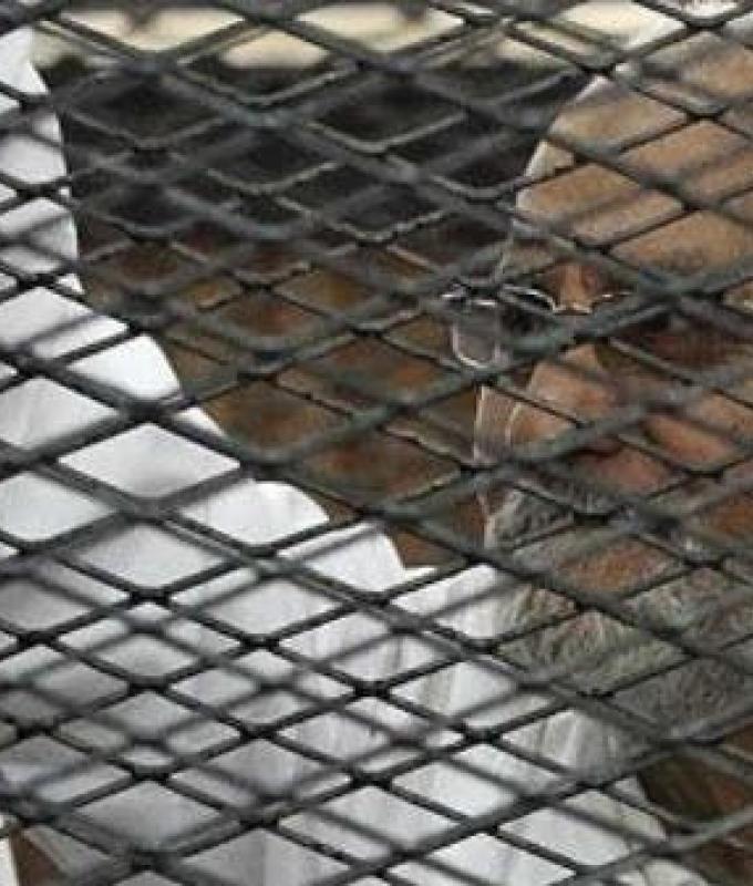 مصر | شباب إخوان مصر يطلبون العفو.. اعتزال السياسة ودفع 5 آلاف دولار