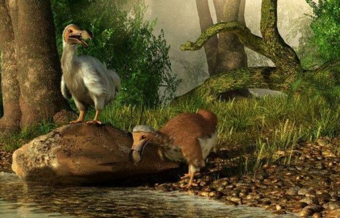 طائر انقرض بفعل الإنسان وأصبح رمزاً للسياحة
