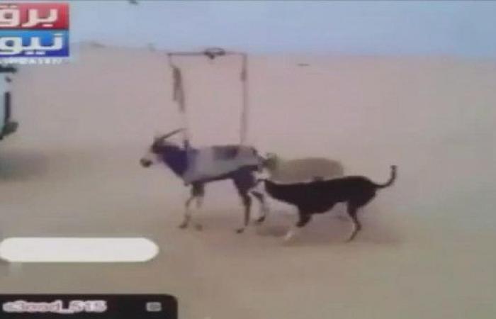 مشاهد سادية.. بهذه الوحشية تلذذوا بتعذيب حيوانات