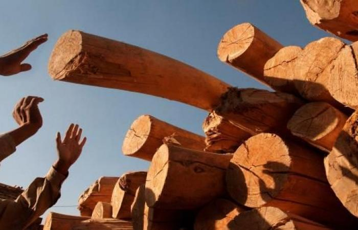 مغاربة يتحملون غلاء خشب التدفئة لمواجهة البرد