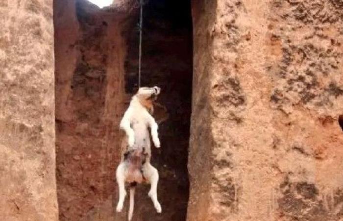"""بعد مجزرة """"كلاب الغبيري"""".. """"شنق"""" كلب جديد في لبنان"""