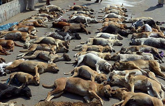 الذبح ينتظر كلاب روسيا قبل المونديال