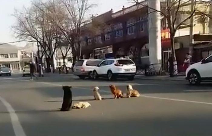بالفيديو… كلاب حرست جثّت صديقتهم للّحظة الأخيرة