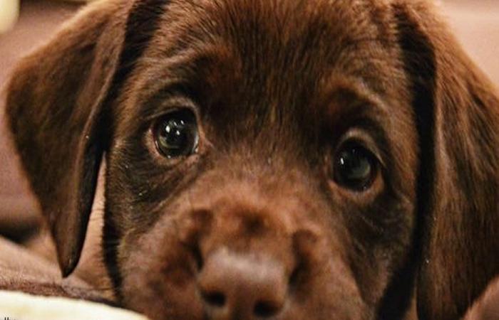 بالفيديو… شاب يرمي كلباً صغيراً في النهر!