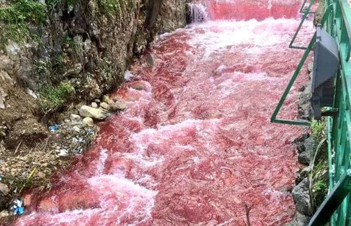 بلدية زحلة توضح: لهذا السبب تلون البردوني بالأحمر