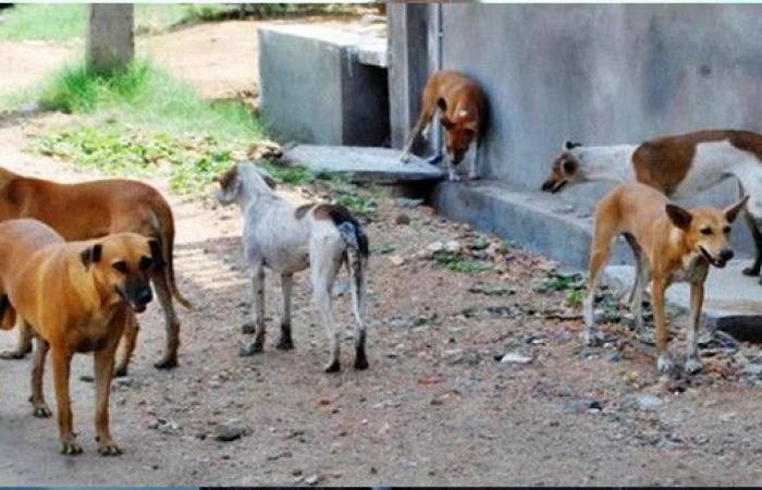 بلدية لبنانية تحذر من الكلاب الشاردة!
