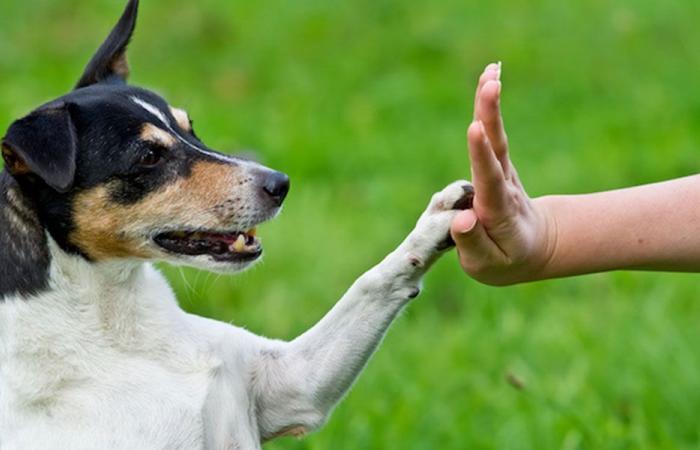 كيف تخاطب الكلاب؟