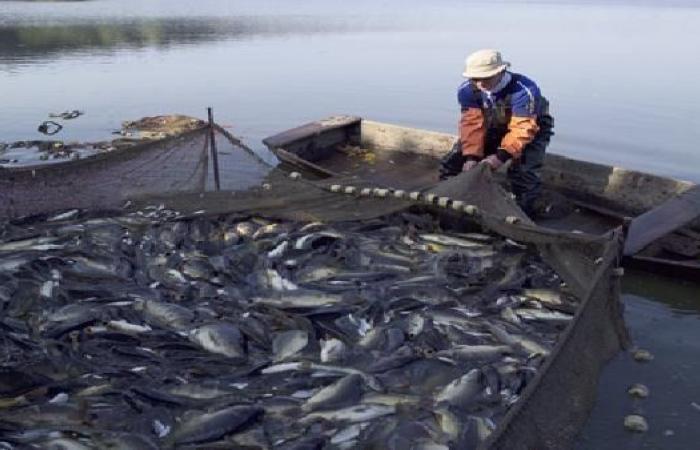 """اتفاقية الصيد بين المغرب وأوروبا تتجدد..وتشمل """"الصحراء"""""""