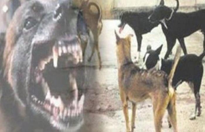 الهند.. كلاب متوحشة تأكل 6 أطفال خلال أسبوع!
