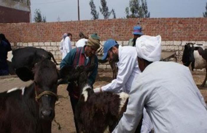 فيديو.. «الزراعة»: حملة قومية لتحصين الماشية ضد الأمراض الوبائية