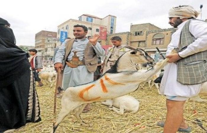 اليمن | ارتفاع أسعار الأضاحي والسلع الأساسية في اليمن وسط معاناة المواطنين