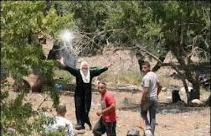 فلسطين | مستوطنون يقطعون عشرات أشجار الزيتون في عرابة جنوب جنين