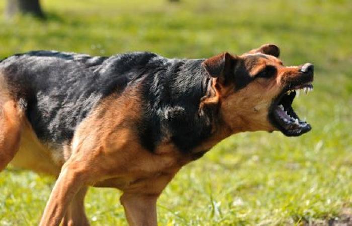 """""""الصحة"""" تجدد التحذير من ظاهرة التعرض لعضات كلاب"""