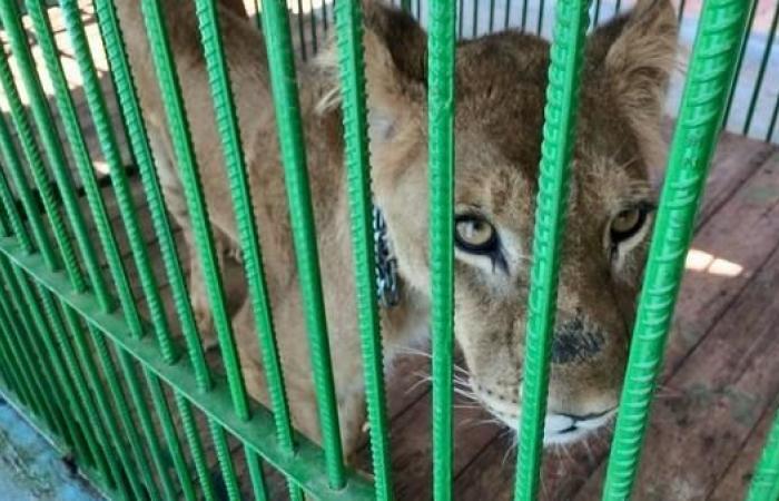 مصر | صور لحيوانات نادرة في مصر ضبطتها السلطات مع مخالفين