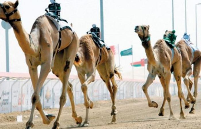 """""""غينيس"""" تعلن مهرجان محمد بن سلمان للهجن الأكبر عالميا (صور)"""