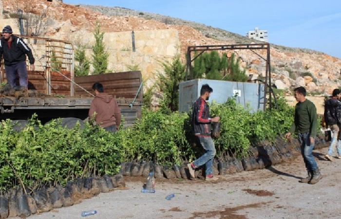 توزيع 200 ألف غرسة على بلديات اتحاد جبل عامل