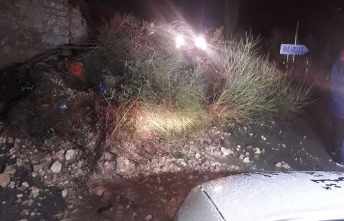 سقوط شجرة على طريق عام النمورة