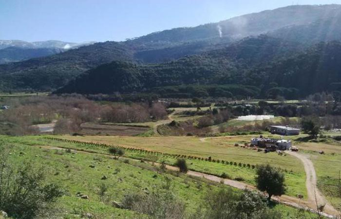 """""""حملة إنقاذ مرج بسري"""": مشروع السد يهدد البيئة"""