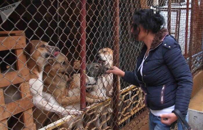 رغم الحرب السورية… احتضَنت آلاف الكلاب والقطط (بالفيديو والصور)
