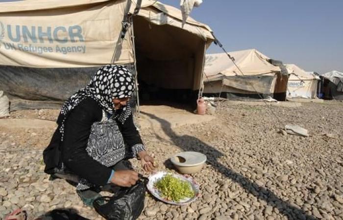 العراق   الفساد يطال أغذية النازحين بالعراق.. ووزارة الهجرة توضح