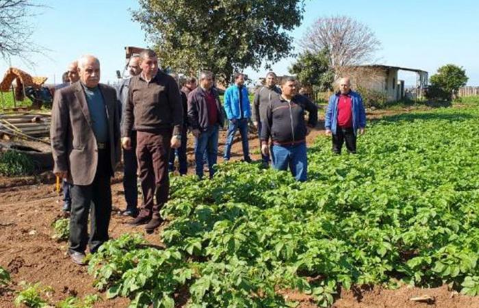 مزارعو البطاط في عكار: لدعم الانتاج اللبناني حصرا