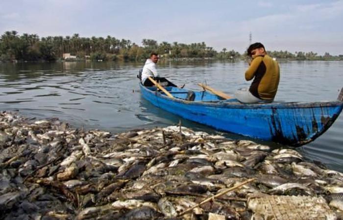 العراق | وباء فيروسي وراء نفوق آلاف الأسماك بالعراق