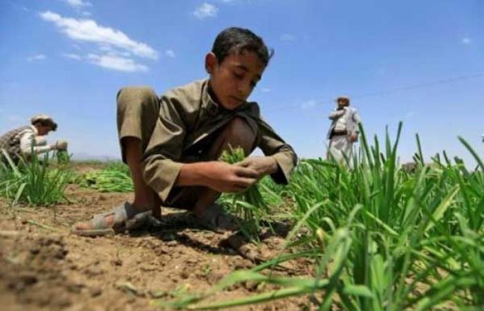 الأمم المتحدة: 113 مليون شخص يعانون جوعًا حادًا