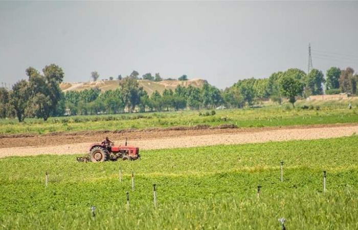 العراق حصد نحو 500 ألف طن من القمح منذ بداية الموسم