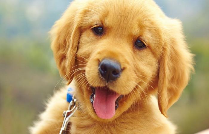 كلب ينقذ رضيعة في روسيا (بالفيديو)