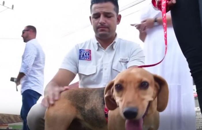 أول محاكمة في أميركا اللاتينية في قضية سوء معاملة كلب