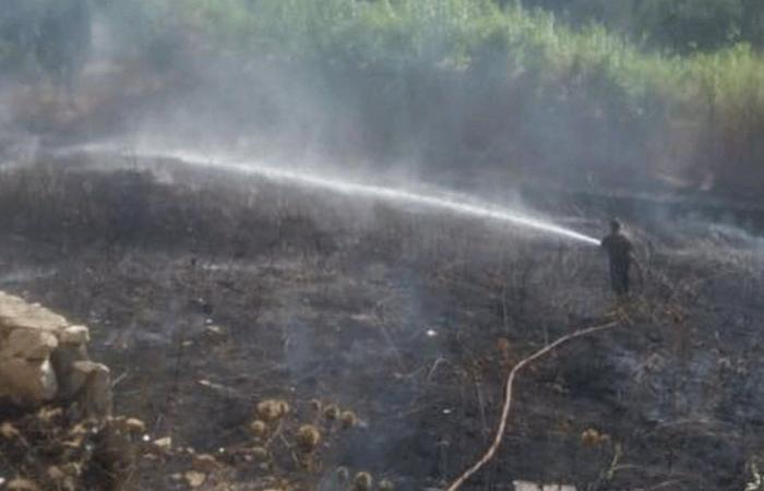 حريق طال مساحة كبيرة من أشجار الزيتون في أميون