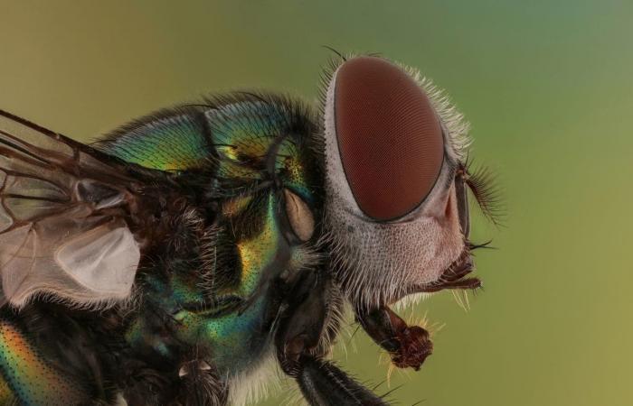 الخليح | مصور سعودي قاده الهلع من الحشرات إلى ملاحقتها