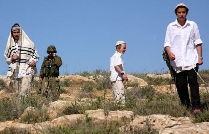 فلسطين | الاحتلال يشرع باقتلاع عدد من أشجار الزيتون من ساحات الأقصى