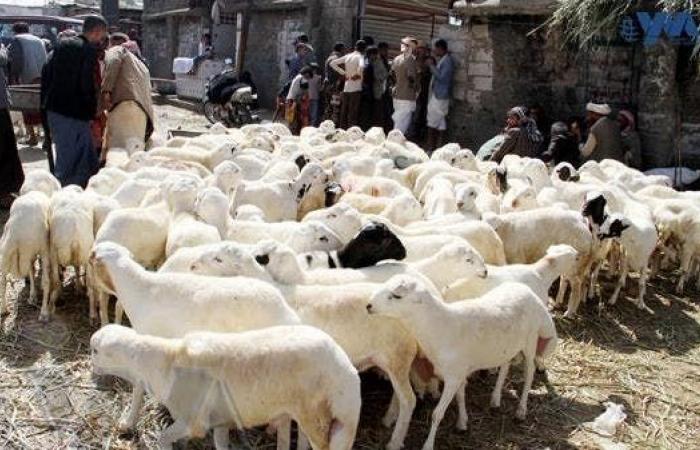 اليمن | اليمن.. ميليشيات الحوثي تفرض رسوماً على أضاحي العيد