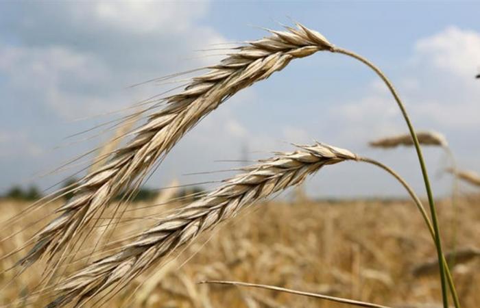 موسكو حصلت على إذن لتصدير القمح إلى الرياض