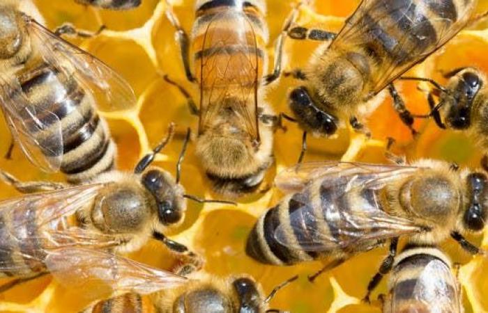 هذه فوائد النوم في غرفة واحدة مع صناديق النحل!