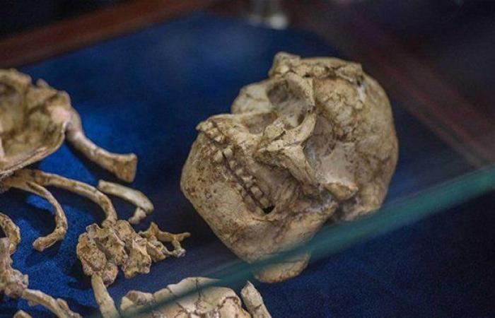 كشف أصل الهيكل العظمي الغامض قرب براغ