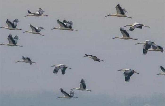 """طيور مزوّدة بـ """"GPS"""" ستمر فوق لبنان.. إيّاكم وإصطيادها!"""