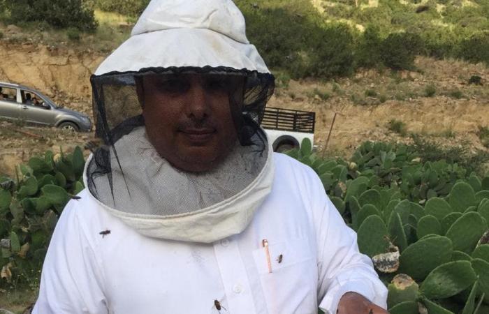 الخليح   عائلة سعودية تعشق النحل منذ 50 عاماً.. تعرف على قصتها