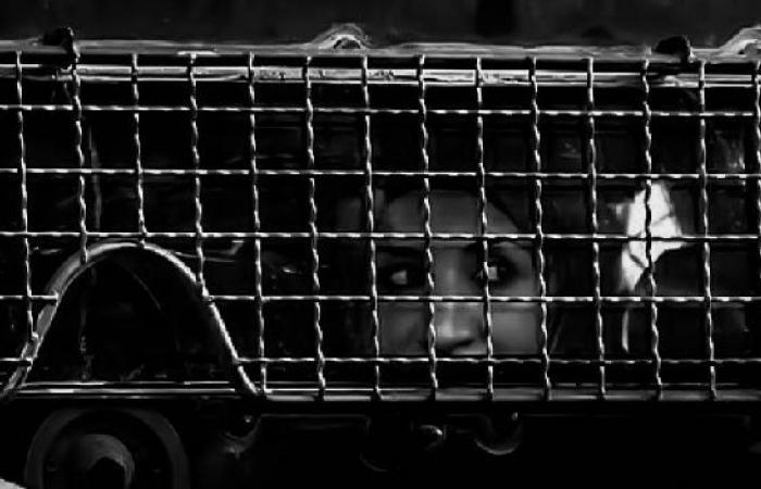 فلسطين | ارتفاع اعداد الأسيرات في سجون الاحتلال الى 40 أسيرة
