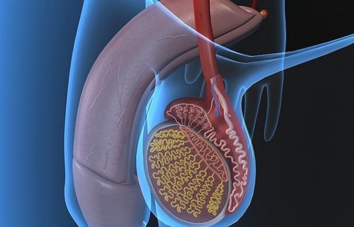 التهاب الخصية Orchitis: الأسباب والأعرض والتشخيص والعلاج