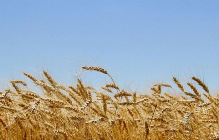 مخزون المواد الغذائية يغطي 4 إلي 8 أشهر... بهذا البلد العربي!