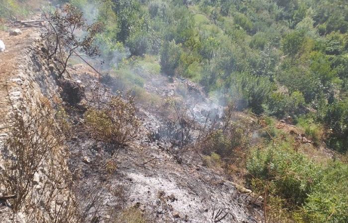حريق في كرم عنب في يحشوش