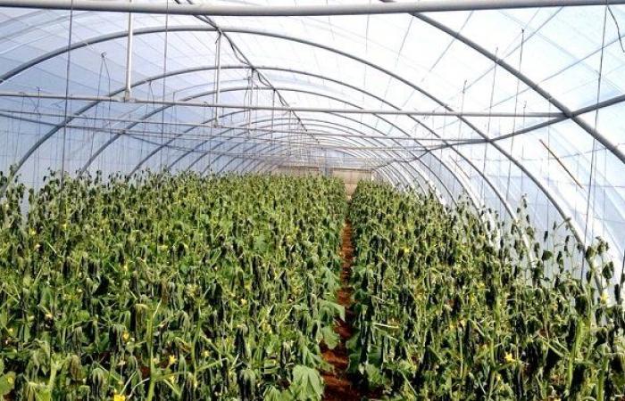 نجاح لبناني في الزراعة