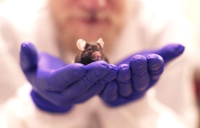 اكتشاف خلايا دماغية نوعية للجنس داخل أدمغة الفئران