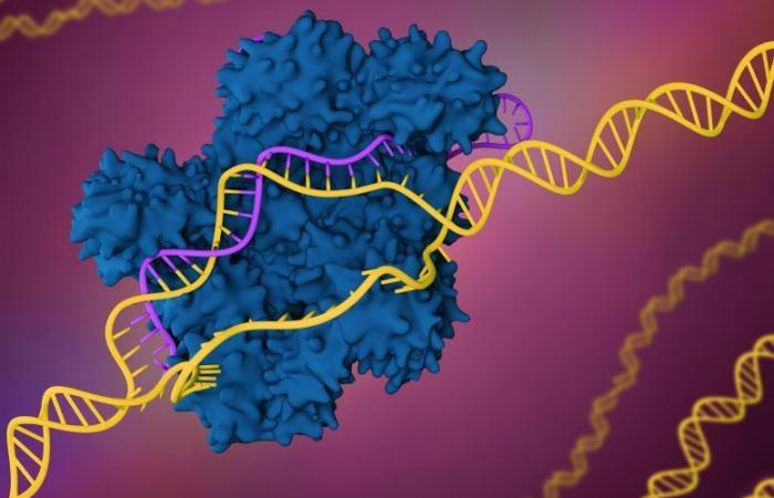 من الممكن أن تكون تقنية كريسبر آمنةً لعلاج السرطان