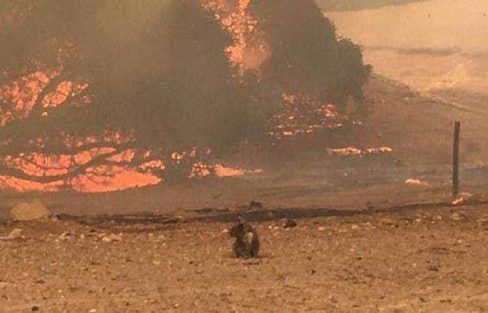 الخليج | إرشادات للمبتعثين السعوديين في أستراليا وسط استمرار الحرائق