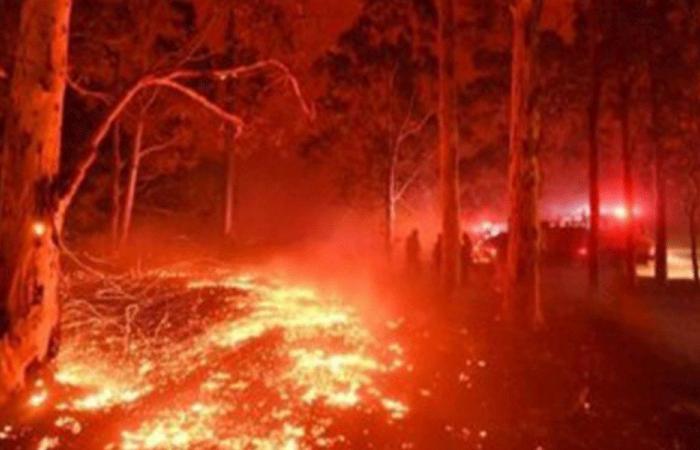 """""""صقر النار"""".. قصة طائر متهم بنشر """"الجحيم """" في أستراليا"""